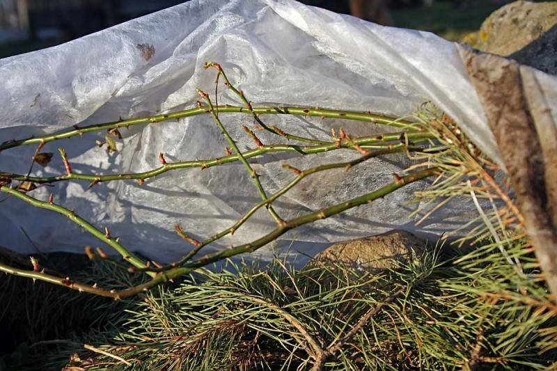Подготовка к зиме хост и астильб. хоста: уход осенью, обрезка и подготовка к зиме! причины против обрезки