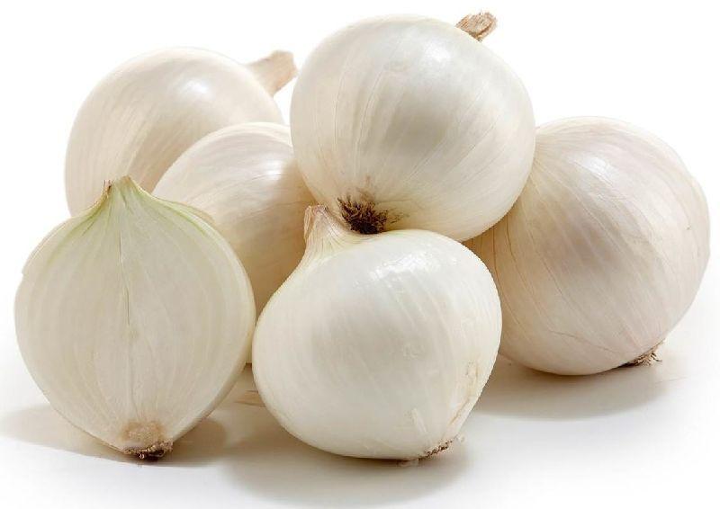 Репчатый лук белый - его польза и вред, фото этого овоща