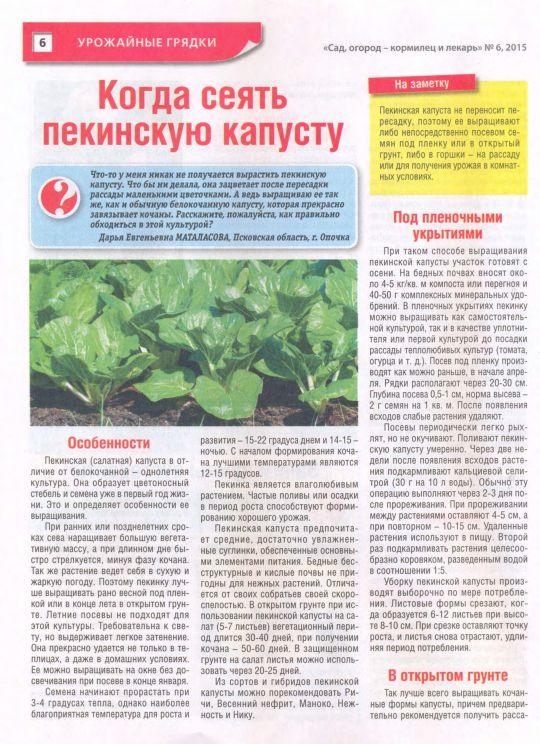 Щавель: посадка и уход в открытом грунте, агротехника и сорта, а также как вырастить на даче, только ли весной сеют, сколько лет размножают на одном месте в огороде? русский фермер