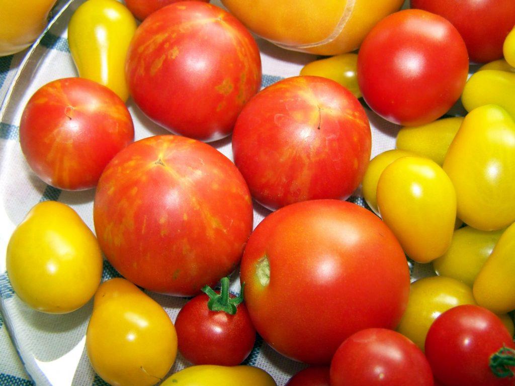 Засолочные сорта помидоров