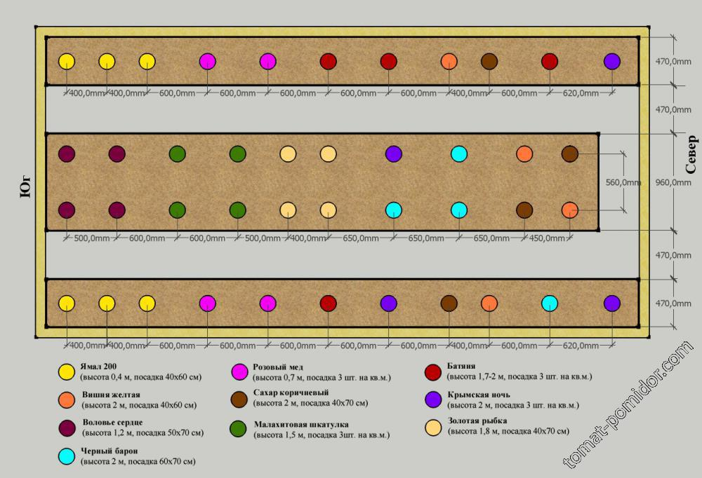 Посадка помидор в теплицу: подготовка почвы, схема, возраст рассады, сроки, особенности, расстояние, фото русский фермер