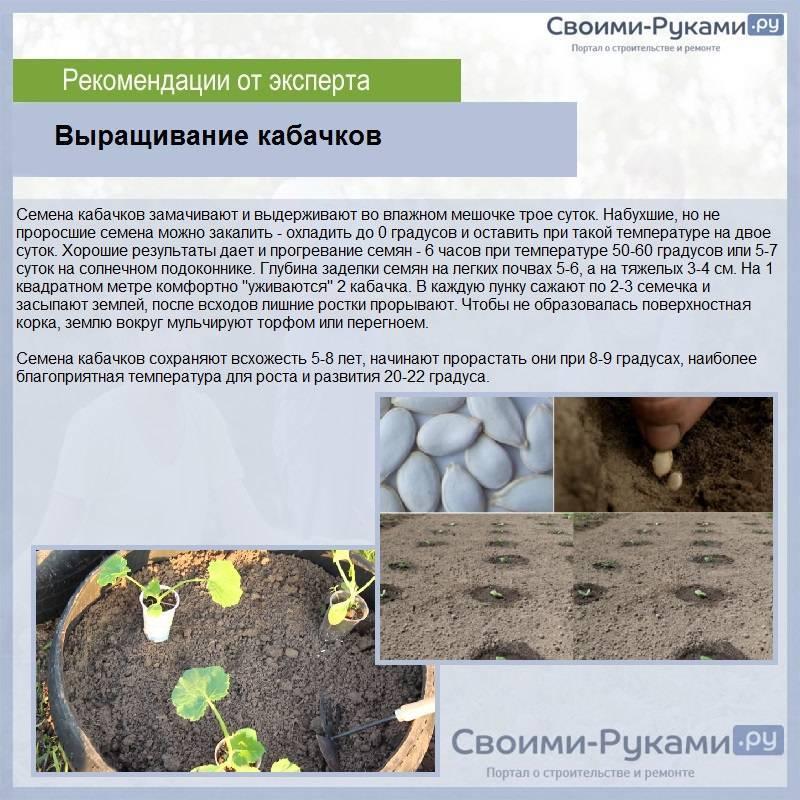 Капуста мегатон f1: описание сорта, фото гибрида и характеристика вкусовых качеств и урожайности, отзывы тех, кто сажал, семена белокачанной, когда убирать