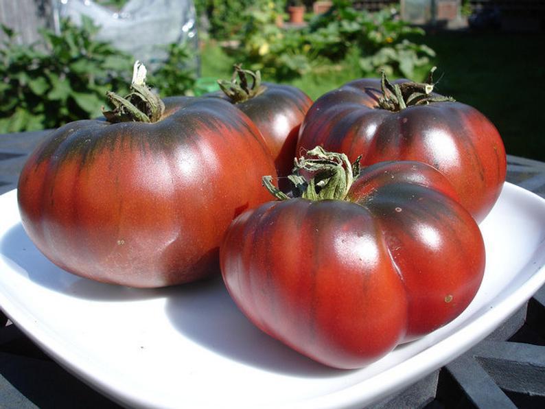 Томат шоколадный: описание сорта, фото, отзывы, характеристика плодов и урожайность