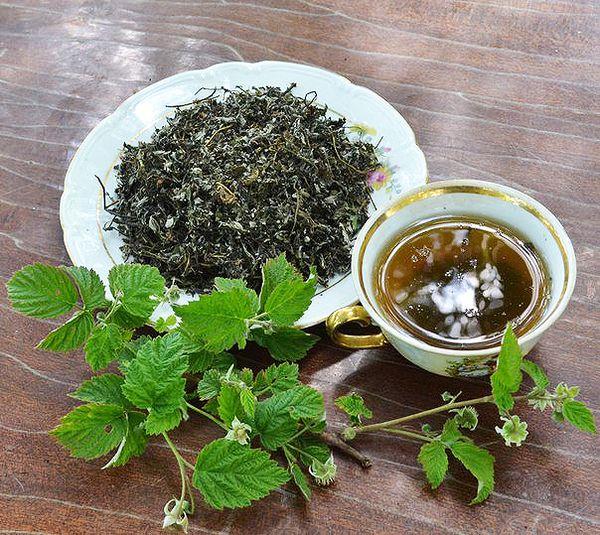 Вред и полезные свойства листьев чёрной смородины