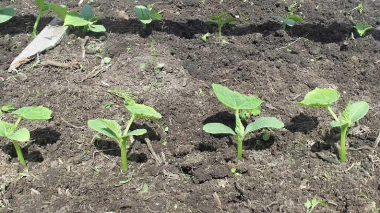 Работы в саду и огороде весной (март, апрель и май): основные и профилактические | (фото & видео) +отзывы