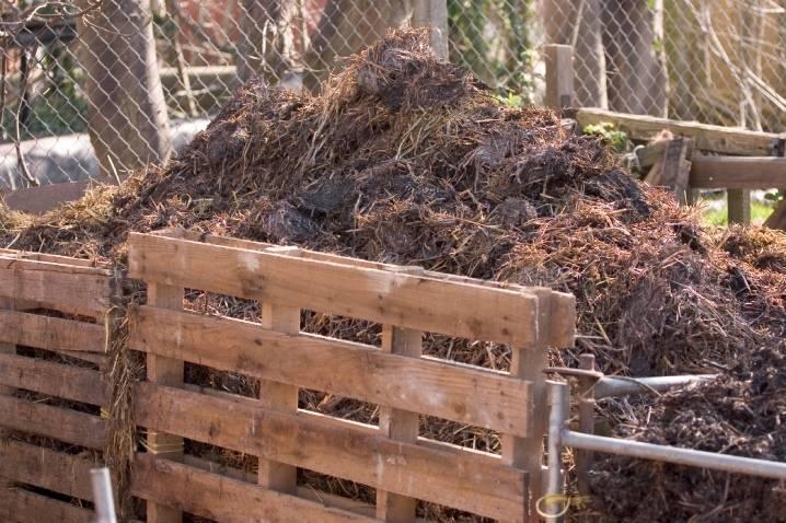 Козий навоз как удобрение: отзывы о его применении, пользе и возможном вреде для растений, советы, как правильно использовать в огороде, нужные дозировки