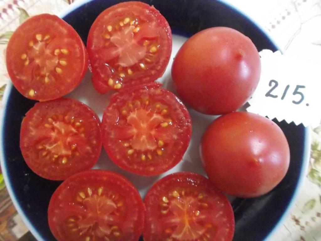 Идеальный сорт для получения богатого, вкусного, раннего урожая помидоров: томат «скороспелка»