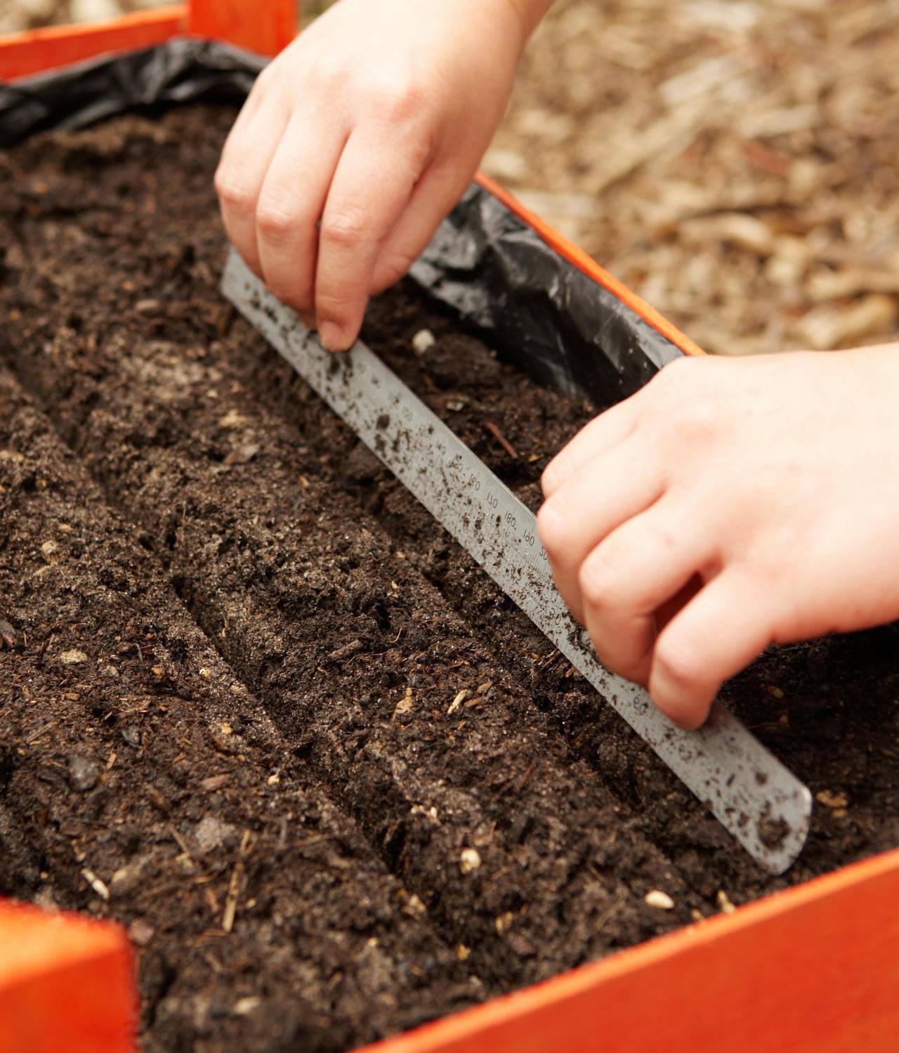 Уход за морковью в открытом грунте: выращивание, как ухаживать, что делать если плохо растет