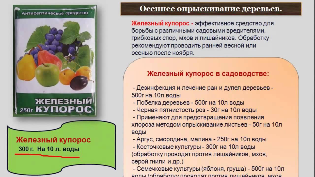 Медный купорос для винограда: обработка осенью, весной и летом. как развести его для опрыскивания черенков и виноградника? пропорции