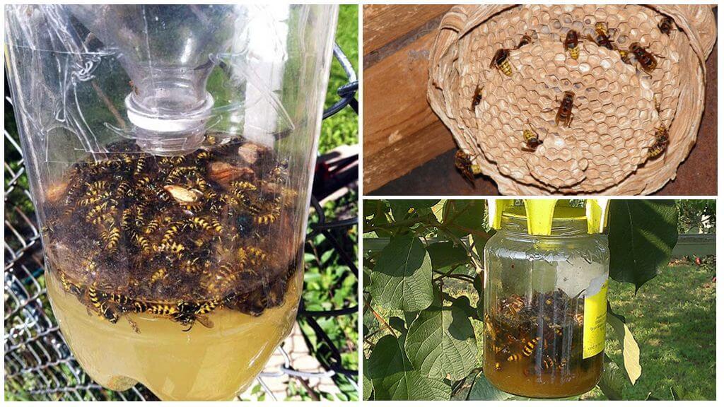 Как избавиться от пчел соседей