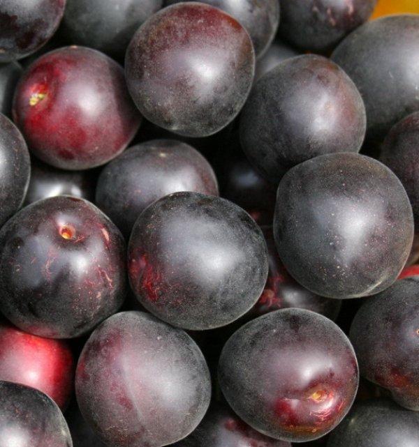 Как вырастить в саду чёрный абрикос