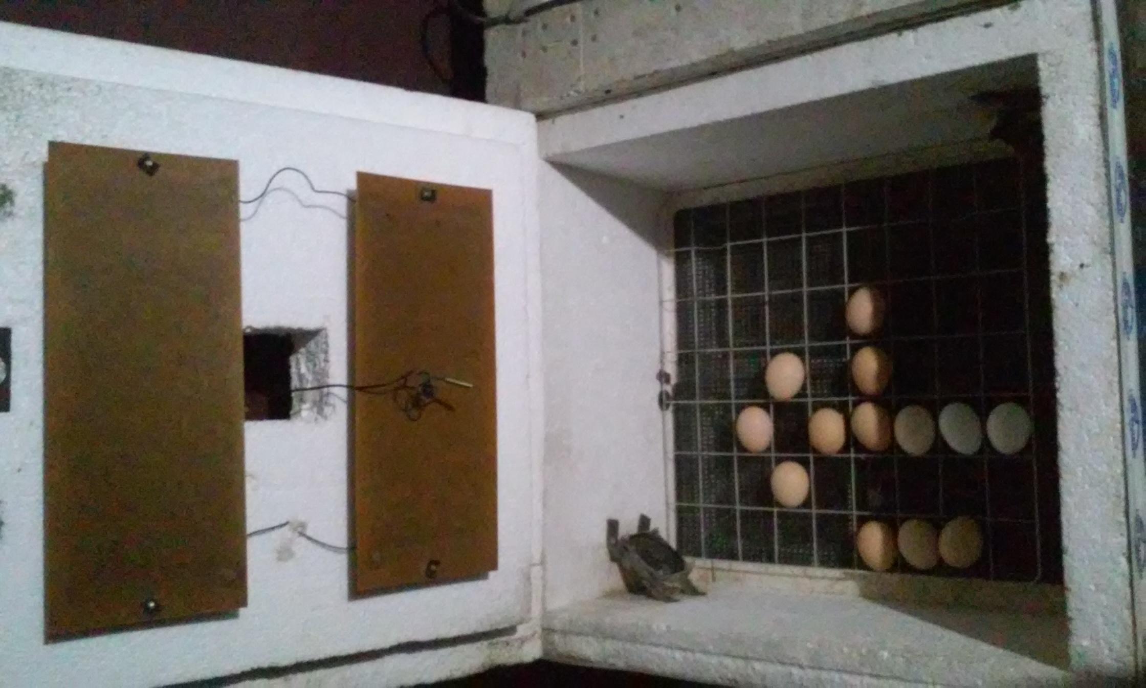 Инкубатор своими руками: как сделать для яиц из холодильника с терморегулятором, схемы, чертежи, фото и видео, изготовление для успешного птицеводства selo.guru — интернет портал о сельском хозяйстве