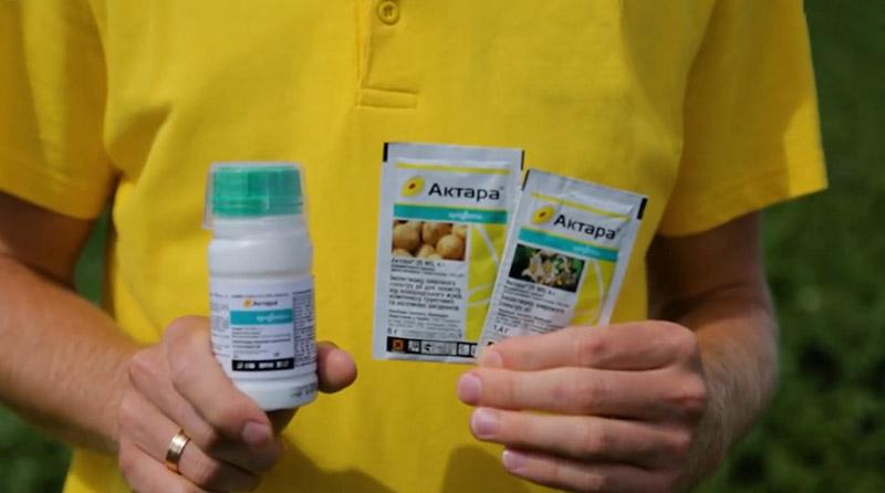 Что такое актара и как использовать этот химический препарат
