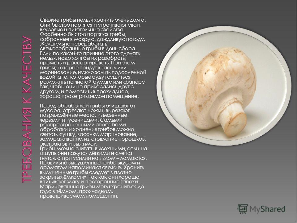 Гриб белянка: описание, полезные свойства, варианты приготовления - дачник