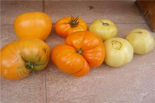 Описание сорта томата тимофей, его характеристика и урожайность