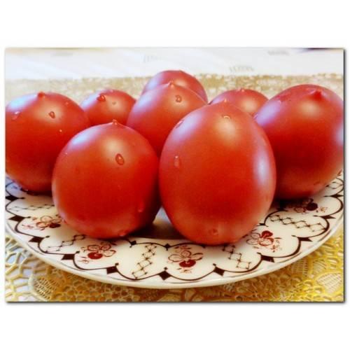 Как вырастить рассаду томатов в домашних условиях на supersadovnik.ru