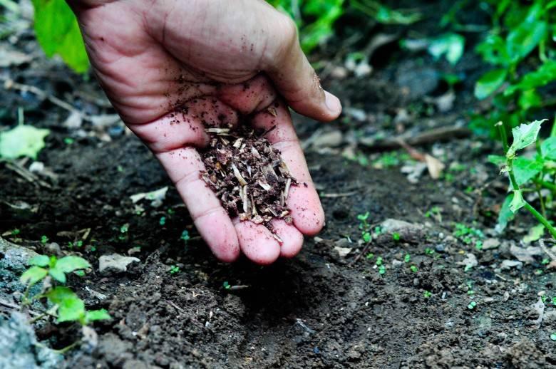 Костная мука как удобрение - применение, инструкция, состав