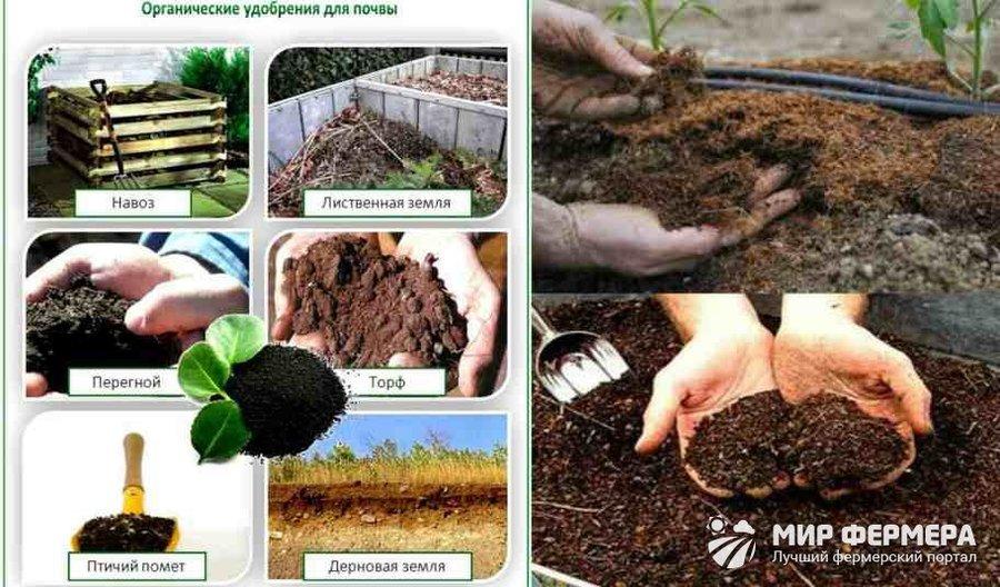 Удобрения для сада и огорода: как правильно выбрать и использовать подкормку