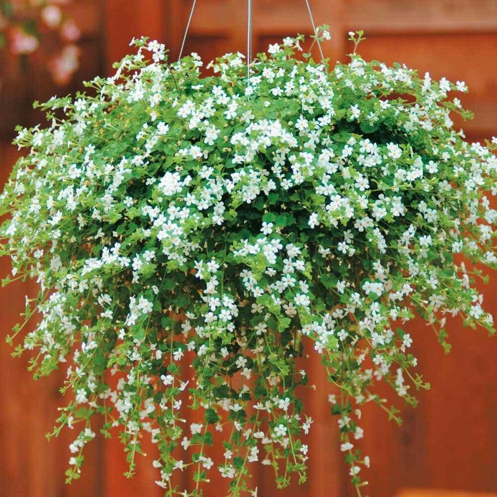 Ампельные садовые цветы: составляем 5 оригинальных композиций