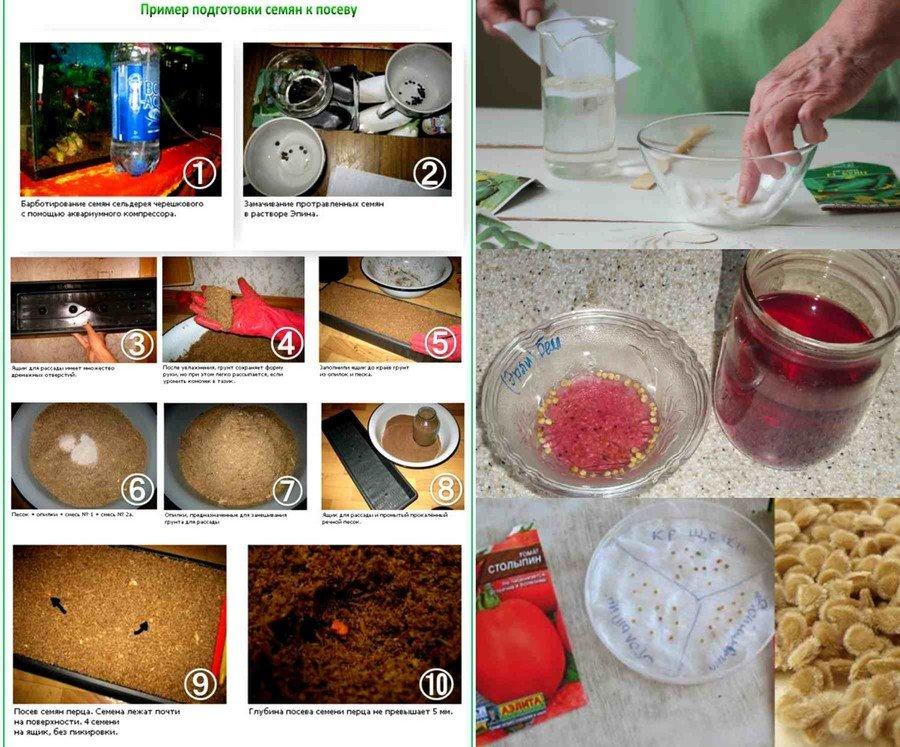 Подготовка семян огурцов к посеву: правильное замачивание, фото и видео