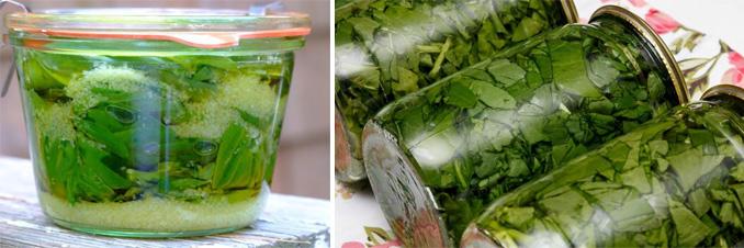 Как заготовить (сохранить) базилик: на зиму, в холодильнике, свежий