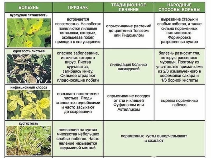 Опрыскивание сада мочевиной (карбамидом) – как приготовить раствор, сроки и правила опрыскивания