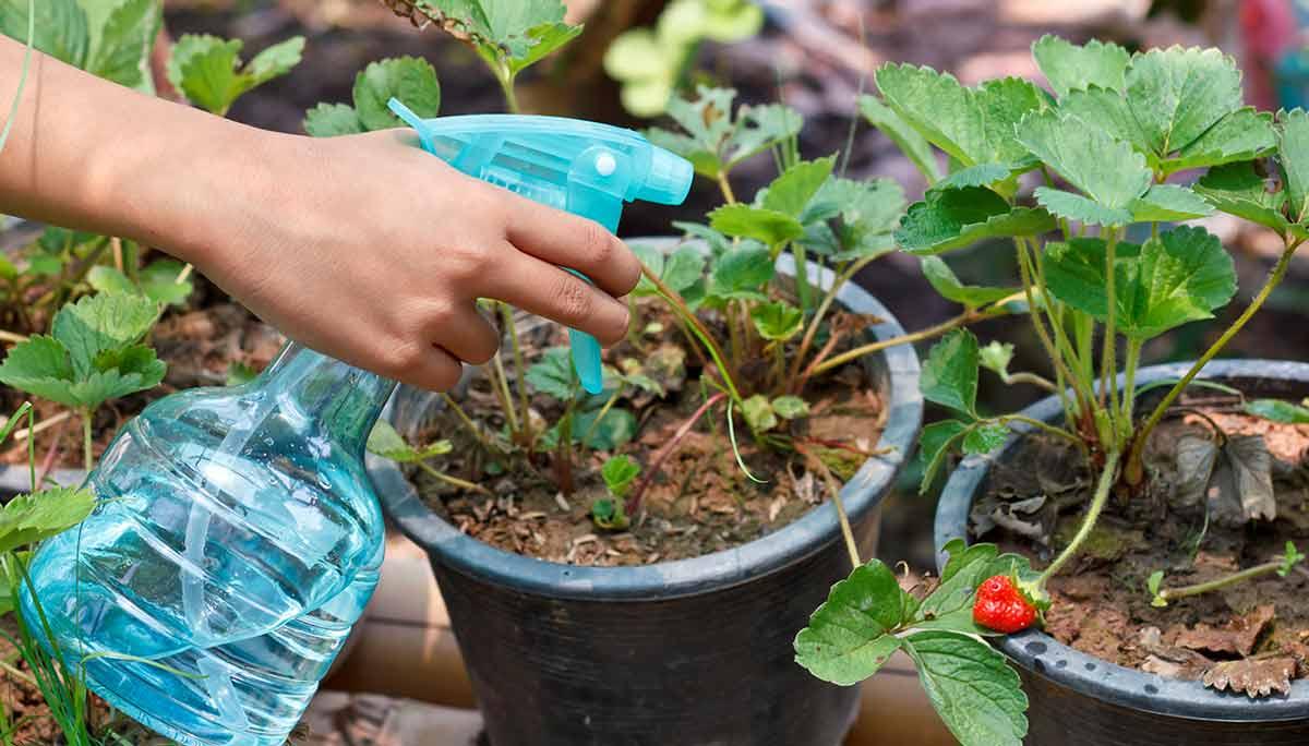 Уход за растениями в теплице