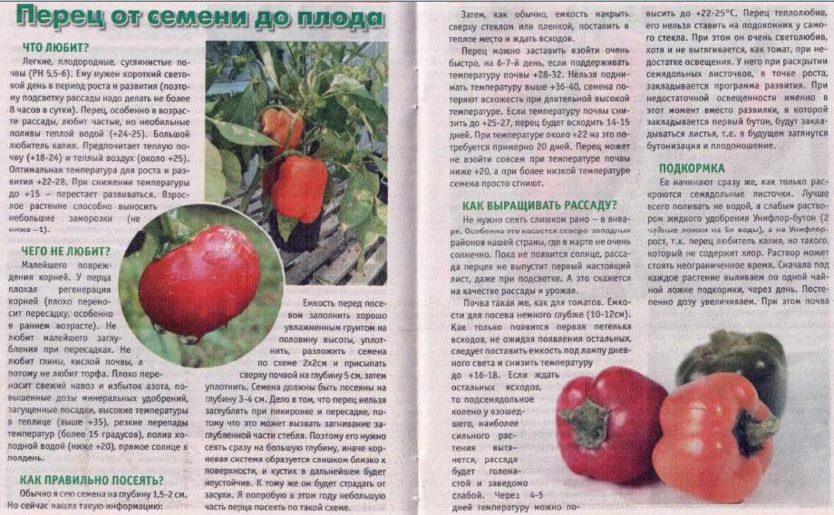 Дайкон: посадка и уход в открытом грунте, выращивание из семян