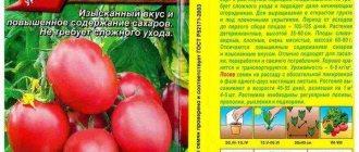 Томат медовые росы — описание и характеристика сорта | zdavnews.ru
