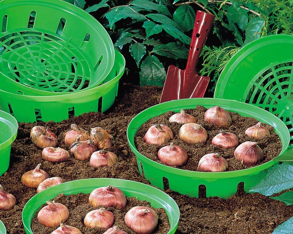 Когда сажать тюльпаны осенью в подмосковье в 2020 году: благоприятные дни для посадки и полезные советы