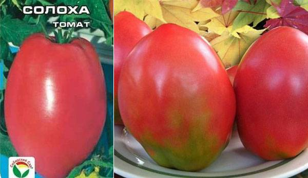 Томат солдатово: отзывы об урожайности, фото помидоров, описание сорта и характеристика