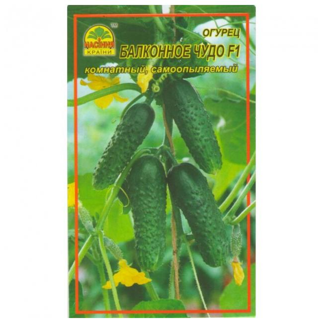 Огурцы «балконное чудо f1»: особенности выращивания в домашних условиях
