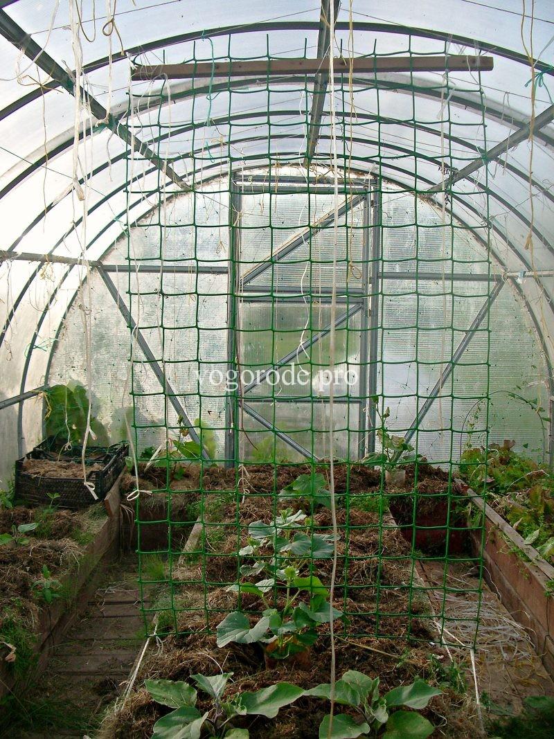 С чем растить дыни в теплице - сам себе сад