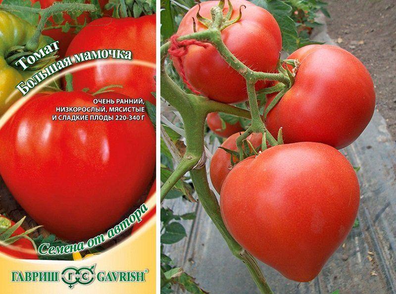 Описание среднеспелого сорта томата Пани Яна и правила выращивания