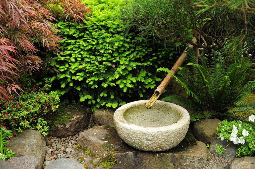 Морозостойкий садовый бамбук виды, где купить