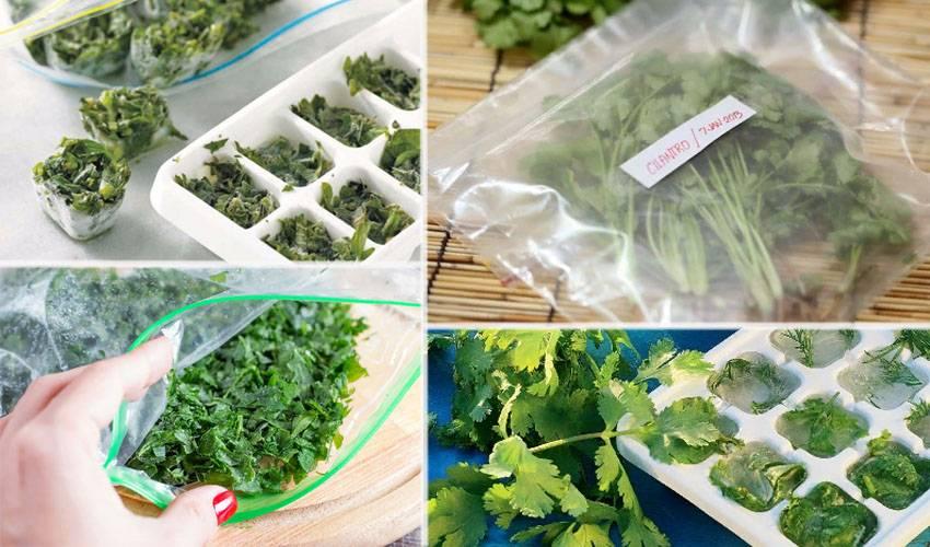 Как хранить базалик в домашних условиях: как сохранить на зиму в свежем виде, сколько хранится в холодильнике