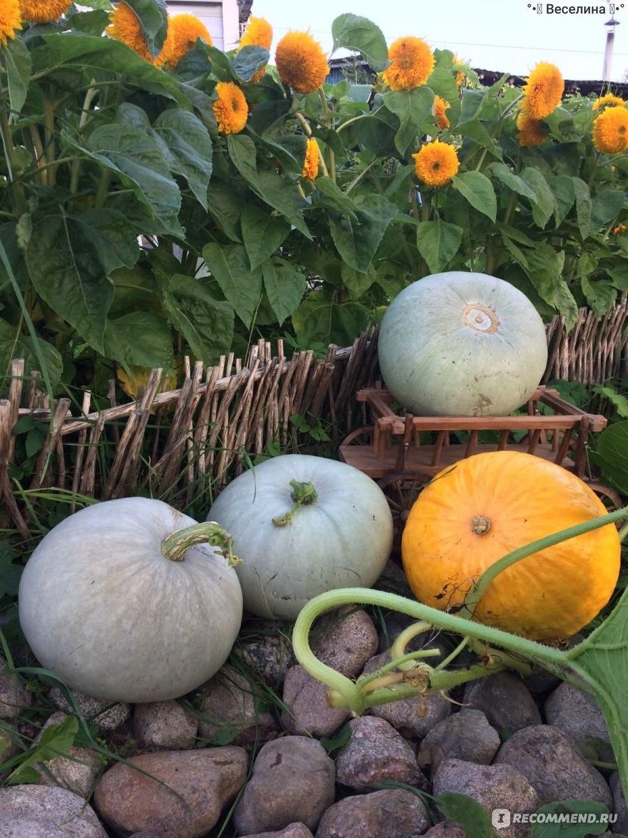 Выращивание и использование декоративной тыквы - огород, сад, балкон - медиаплатформа миртесен