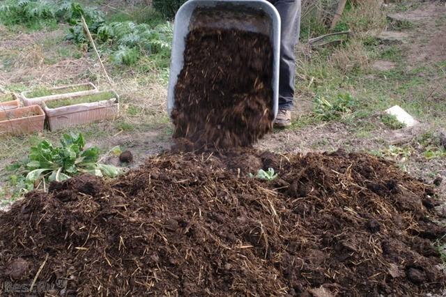 Свежий навоз: применение весной и осенью на даче и садовом участке, какие культуры его любят, как вносить в почву для максимальной эффективности для растений?