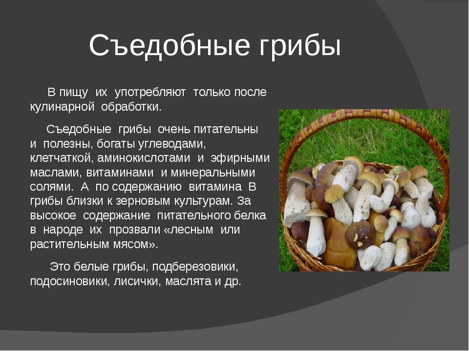 Описание грибов белянок и как их солить (+25 фото)?