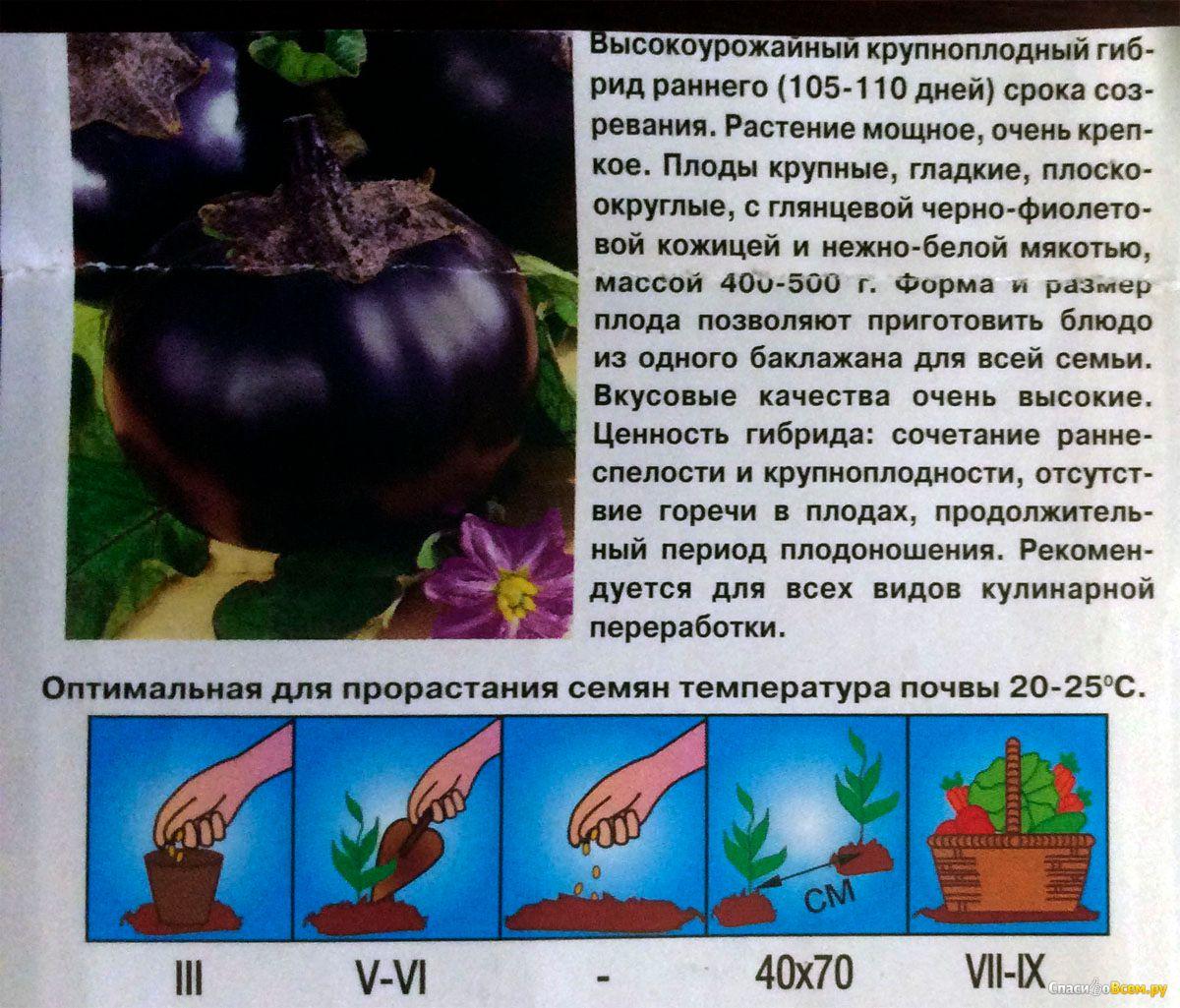 Баклажан щелкунчик — описание сорта, фото, отзывы, посадка и уход