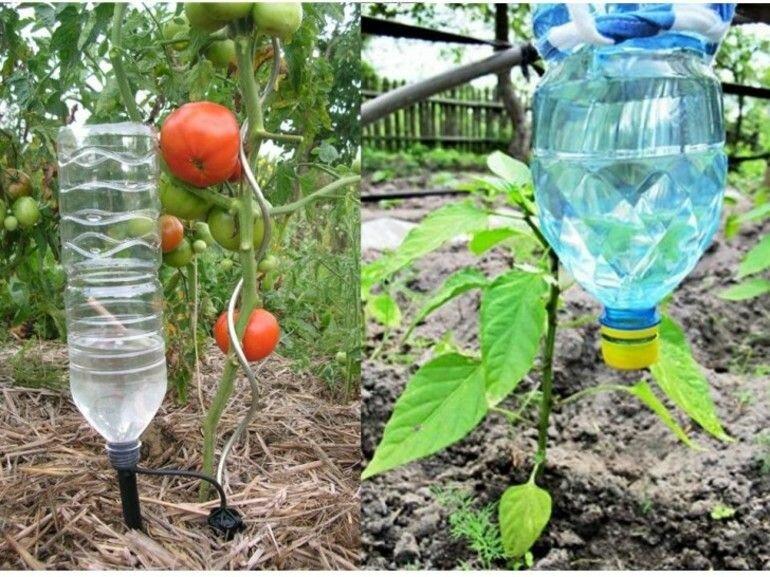 Капельный полив в теплице: как сделать своими руками, преимущества капельной системы полива, орошение из бочки и из пластиковых бутылок