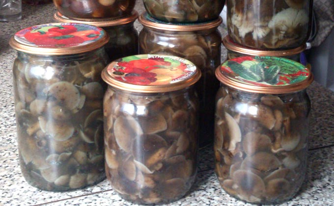 Вкусная засолка черных груздей в домашних условиях