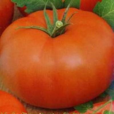 Томат царь петр. щедрые урожаи красивых и очень вкусных томатов — царь пётр: описание и характеристики сорта