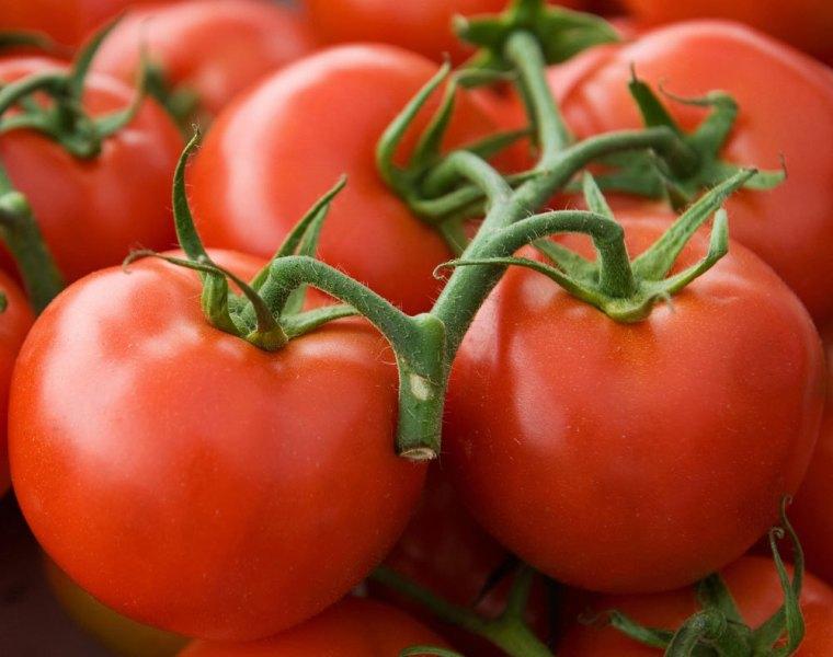 Характеристика и описание сорта томата клуша, выращивание