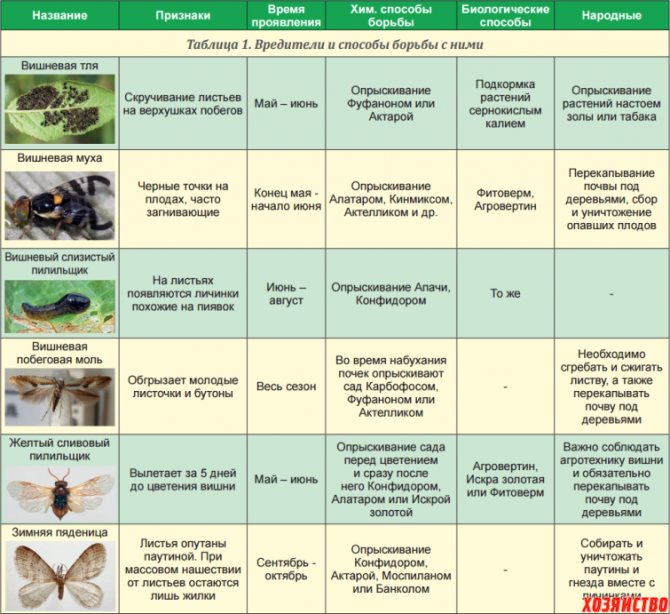 Весенняя обработка клубники в апреле: защита от вредителей и профилактика заболеваний | теплотехники