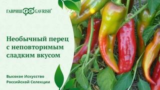 Перец «какаду»: описание и особенности выращивания