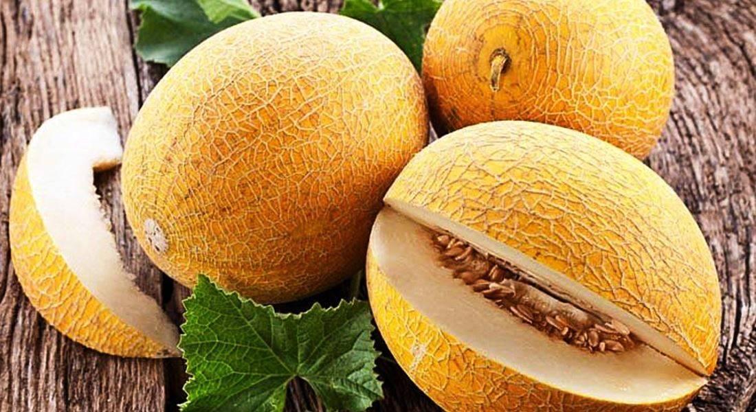 Дыня колхозница: выращивание в теплице, описание сорта, семена, когда сажать, отзывы, полезные свойства, уход, подготовка, рекомендации