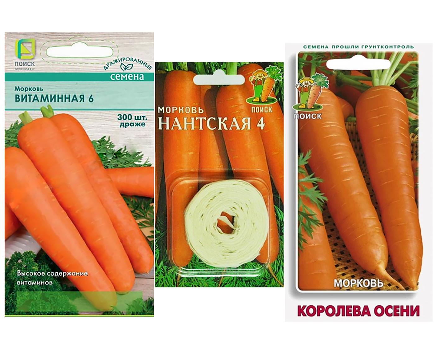 Морковь каротель: подробная характеристика и описание, достоинства и недостатки сорта, особенности выращивания и ухода, а также сбор и хранение урожая русский фермер