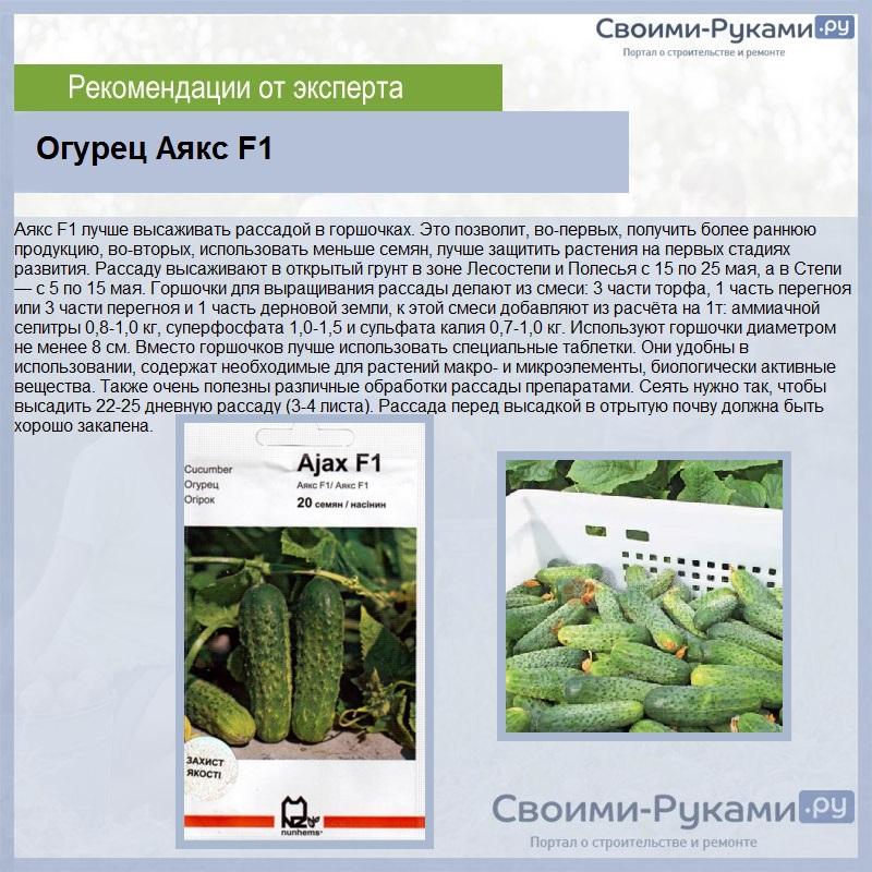 Описание и характеристика огурцов сорта аякс f1