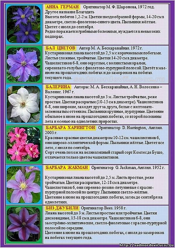 Описание и характеристики сортов клематисов, рекомендации по выбору